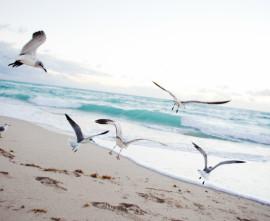 Beach Birds #856