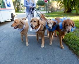 Street Life dogs
